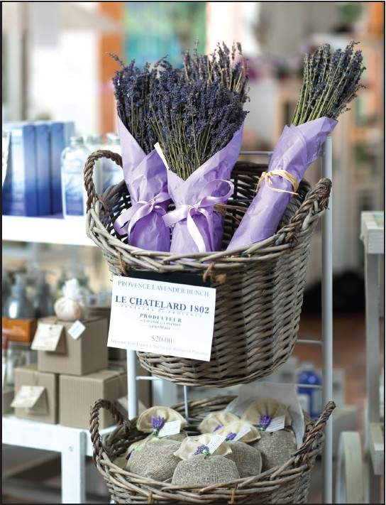 Healing powers of The Lavender | Naples