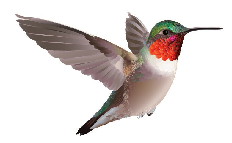 After Wintering In Central And South America Species Such As The Ruby Throated Hummingbird Return To Florida This Time Of Year Build Nests Raise
