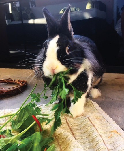 We May Love Rabbits, But That Can Prove Deadly To These