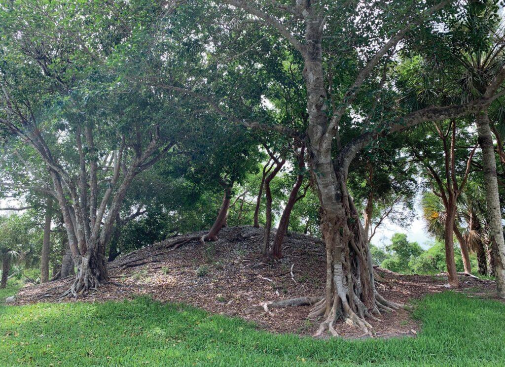 A Calusa Indian mound on the island. ROBIN F. DEMATTIA / FLORIDA WEEKLY